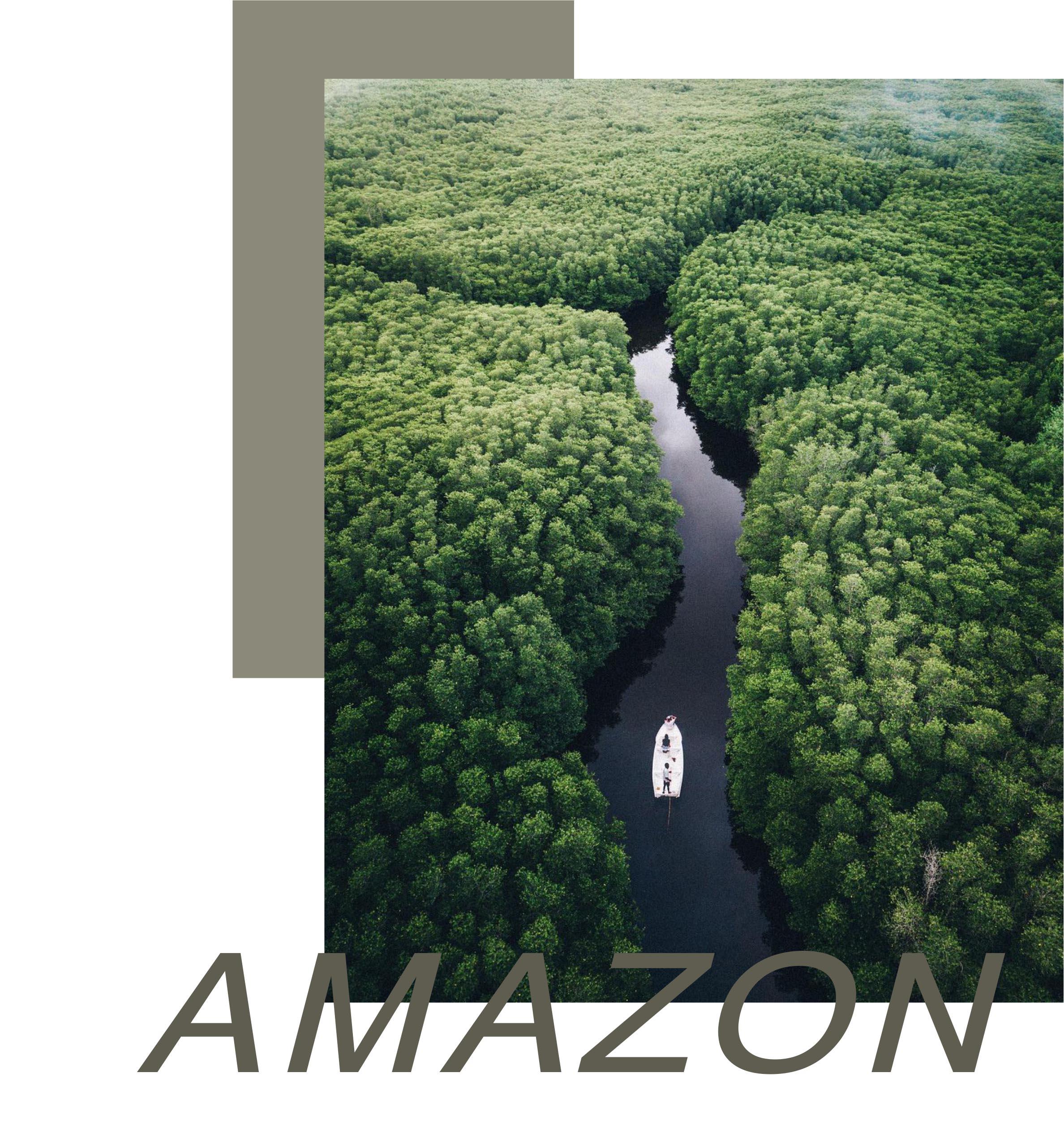 协进750x1500系列新品 |【亚马逊绿】丛林深处走来的精灵